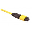 MTP Cable Assembly